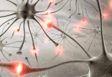 دلیل احتمالی اوتیسم وجود بیش از اندازه سیناپس در مغز است