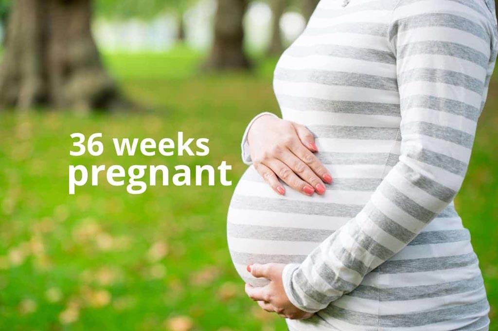 هفته ۳۶ بارداری