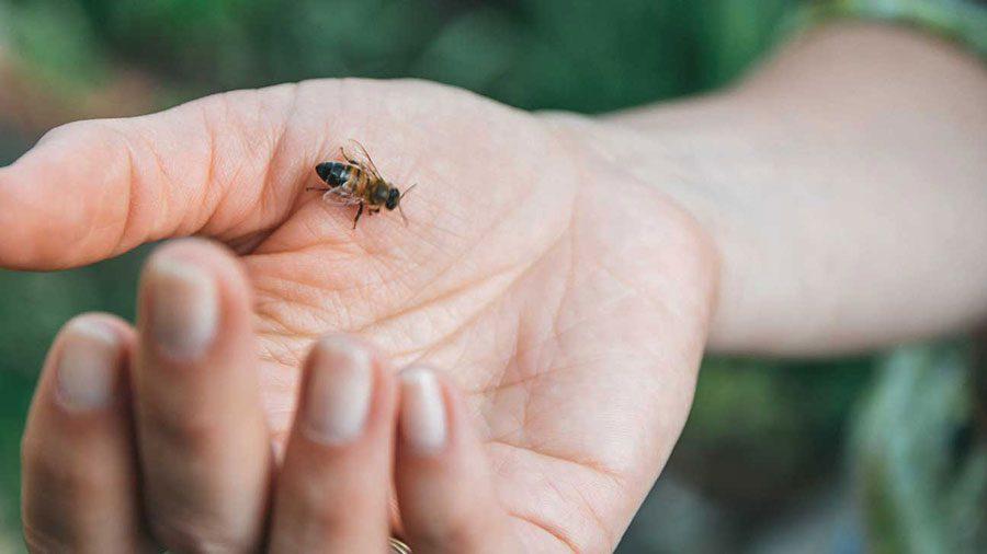 مقابله با نیش زنبور عسل در کودکان