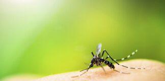 درمان خانگی نیش حشرات ؛ توصیههایی برای والدین کودکان خردسال