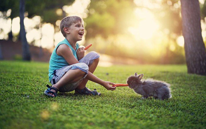 آموزش مهربانی با حیوانات