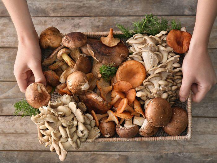 فواید قارچ برای سلامتی