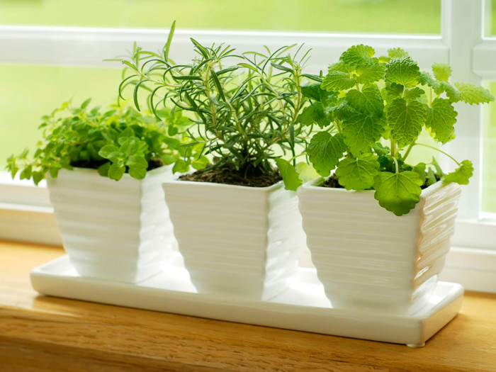 کاشتن گل و گیاه