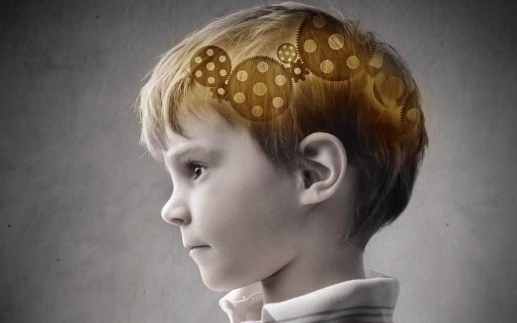 تکامل مغز انسان